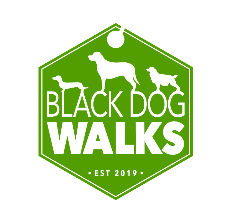Black Dog Walks